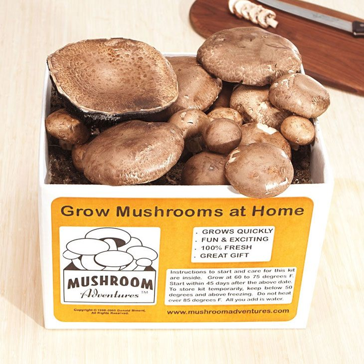 How to Grow Portobello Mushrooms 009