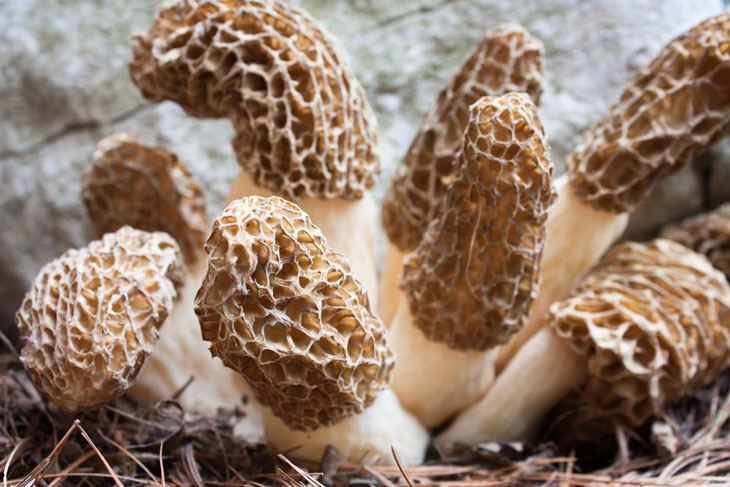 how to grow morel mushrooms 001
