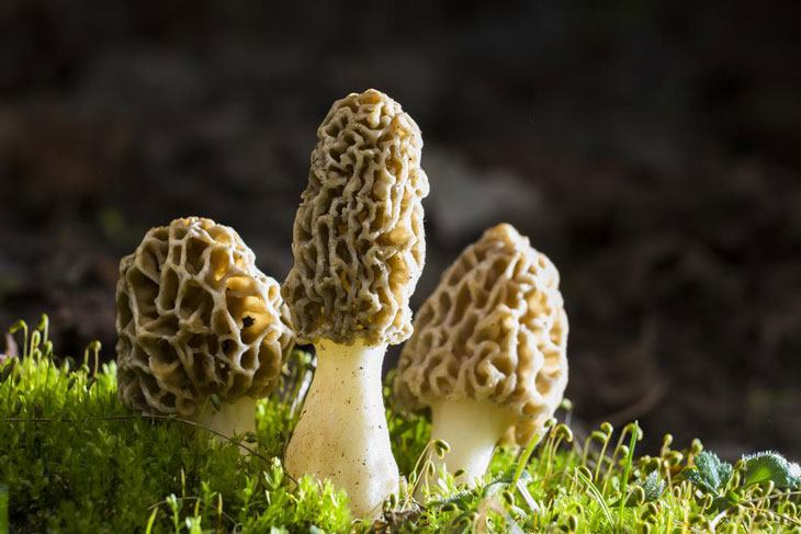how to grow morel mushrooms 007