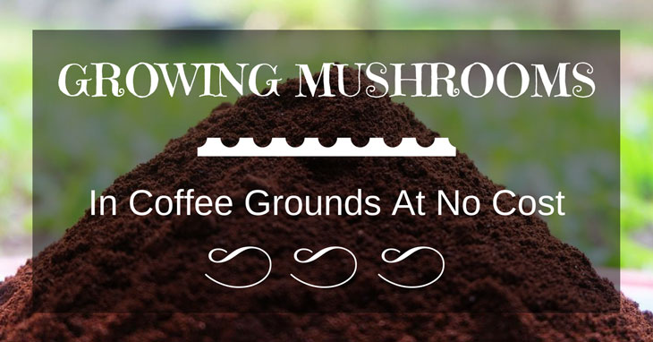 growing mushrooms in coffee grounds at no cost