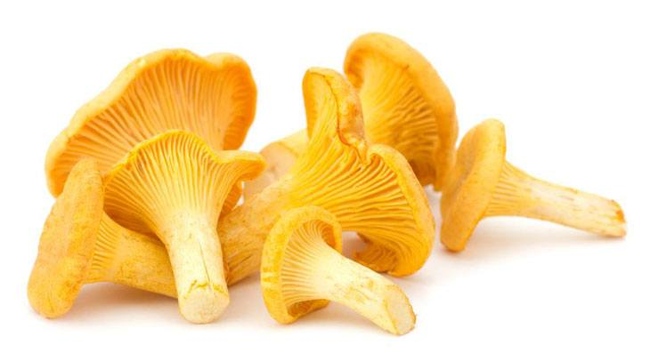 edible mushrooms that grow on trees Chanterelle Mushrooms