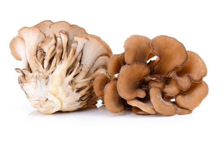edible mushrooms that grow on trees Hen of the Woods