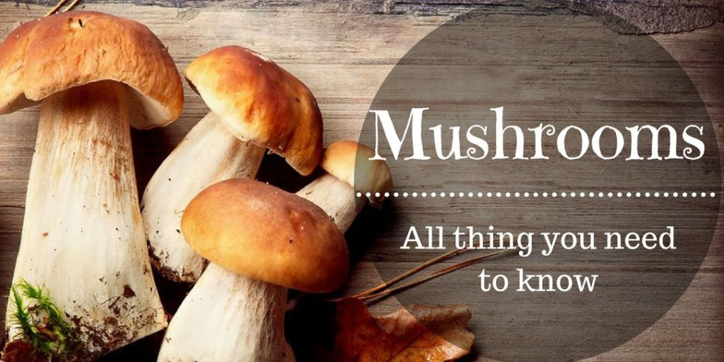 how to grow mushrooms page