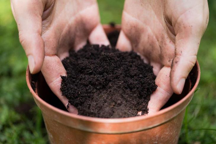 Potting soil vs topsoil 003 grow your way www for Topsoil vs potting soil