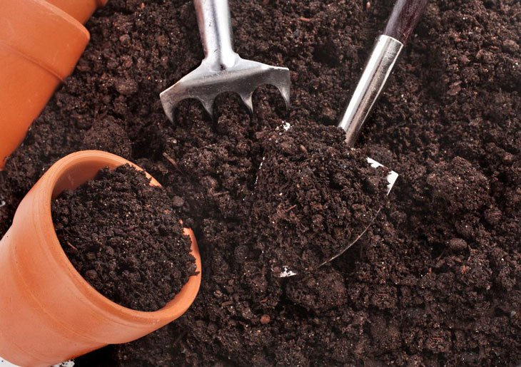 potting soil vs topsoil 004