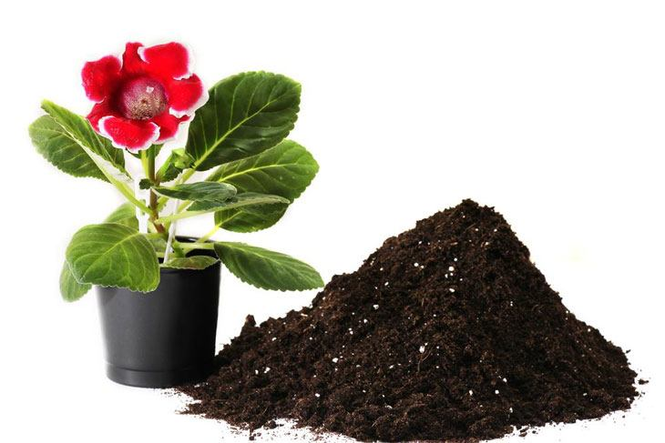Potting soil vs topsoil 005 grow your way www for Topsoil vs potting soil