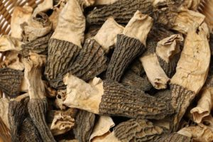how to dry morel mushrooms 002