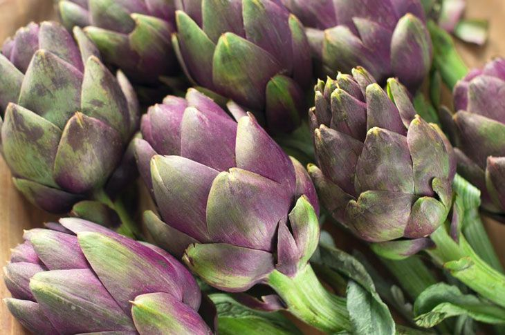 how to grow artichokes from seed 006