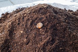how to use worm castings 001