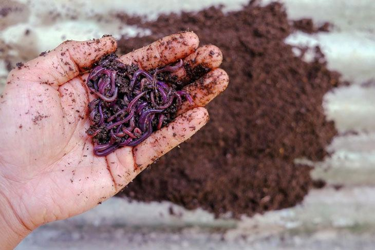 what is vermicomposting 001