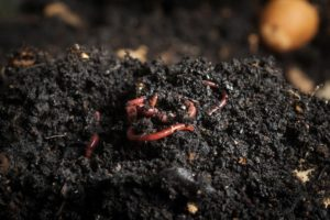 what is vermicomposting 005