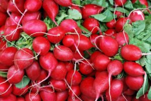 Acid Loving Vegetables Radishes