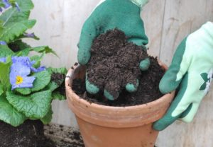 difference between potting soil and potting mix 003.