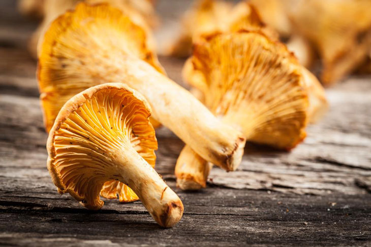 how to store chanterelles 003