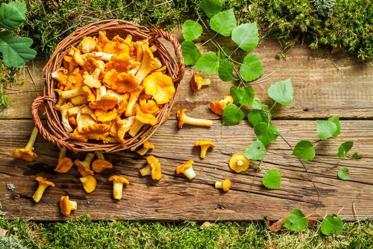 how to store chanterelles 005