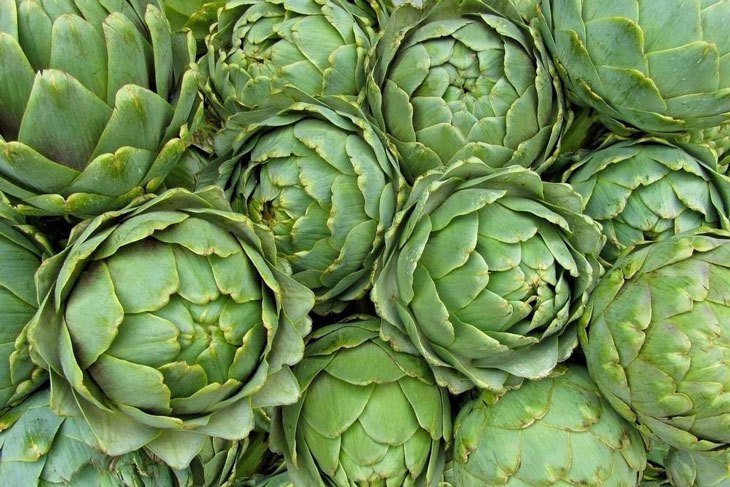 when to harvest artichoke 003