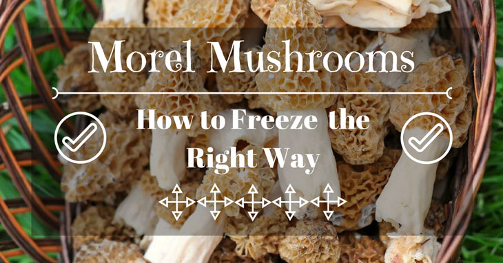 How to Freeze Morel Mushrooms