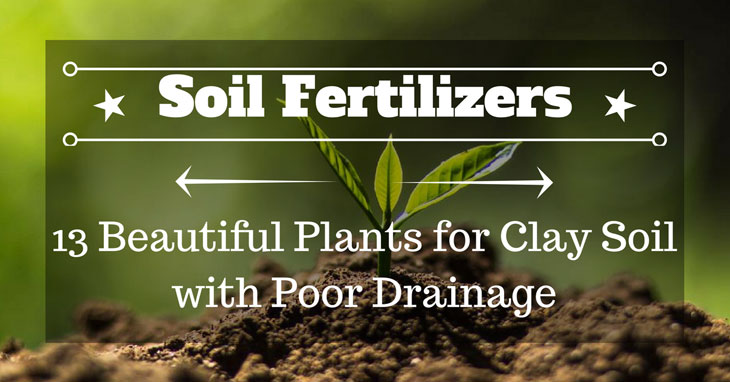 Plants for Clay Soil with Poor Drainage
