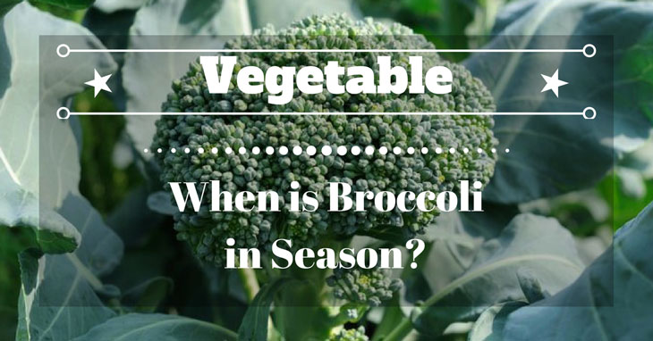 When is Broccoli in Season