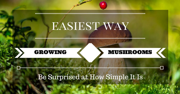 Easiest Way to Grow Mushrooms
