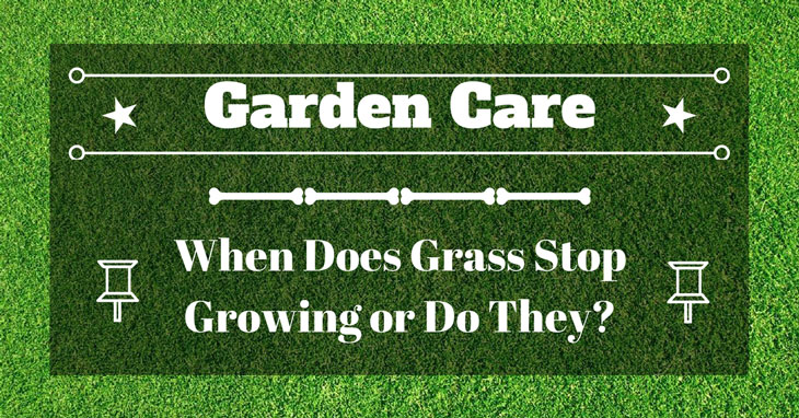 When Does Grass Stop Growing