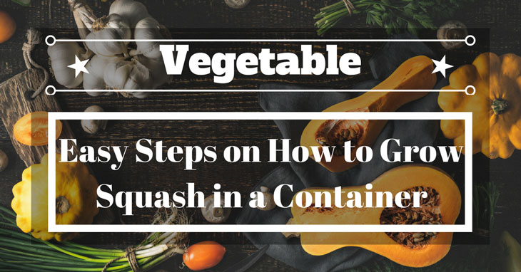grow squash in container
