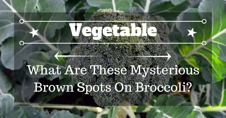 brown spots on broccoli