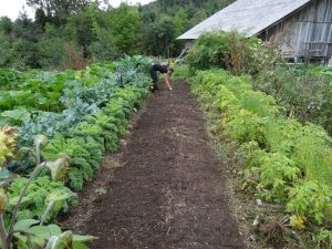 The Garden Bed Vegetable Garden