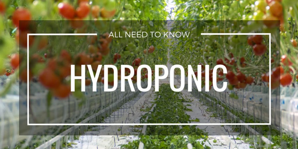 Hydroponic Page