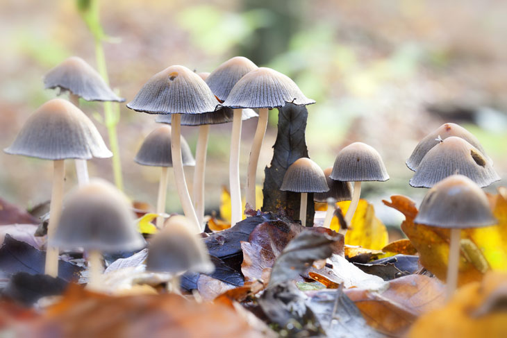 How to Distinguish Poisonous Mushrooms in Nature 002