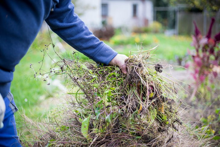 how to get rid of weeds in the garden - Manual Pulling / Plucking Method