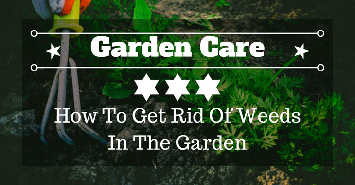 how to get rid of weeds in the garden