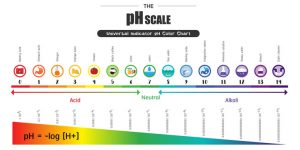 the ph cale - how to check the ph of soil