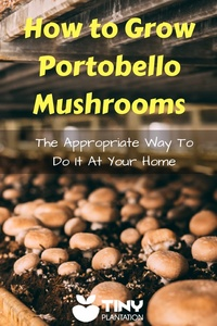 How to Grow Portobello Mushrooms - Pin it