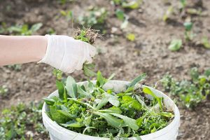 how to make compost from weeds - Wet Decomposing Method