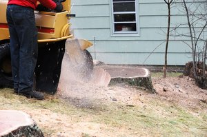 how to remove a tree stump - Chip it and Grind it