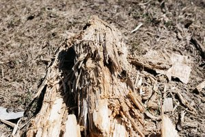 how to remove a tree stump - Killing and Uprooting Method