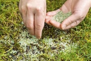 how to seed a lawn - Direct seeding method