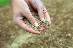 how to seed a lawn - Indirect Seeding Method