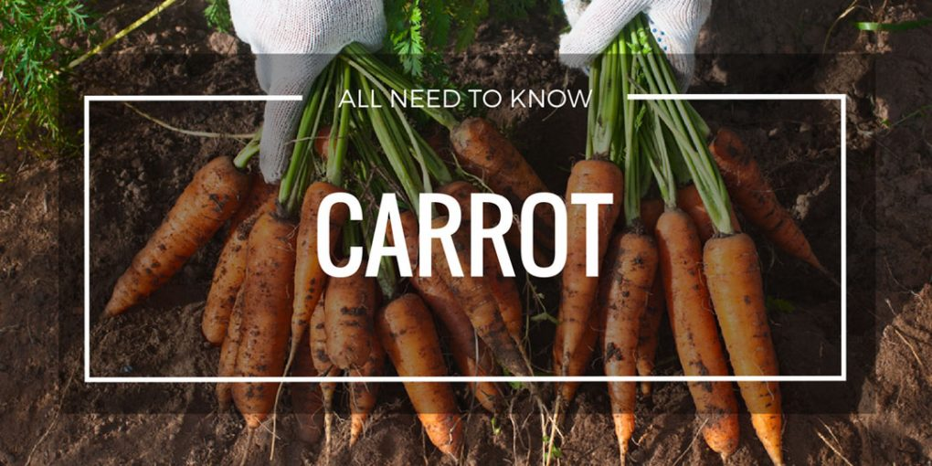 Grow Carrot Page