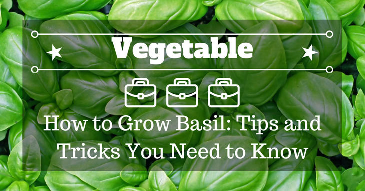 How to Grow Basil: Tips and Tricks You Need to Know