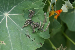 Rid Your Well Loved Garden With Pests